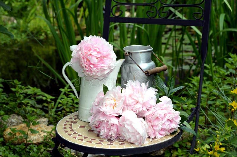 trädgårds- rosa plower arkivbilder