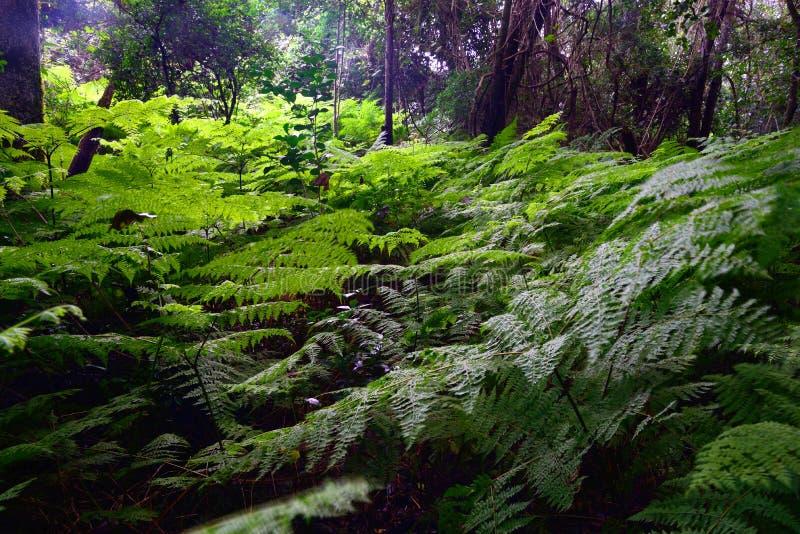 Trädgårds- rutt Forest With Ferns - Sydafrika arkivfoto