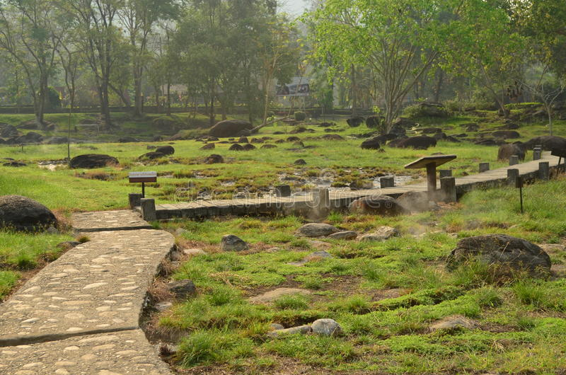 Trädgårds- sikt av den varma våren för huggtand, Thailand royaltyfri foto