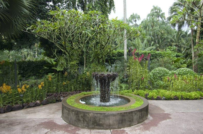 Trädgårds- Singapore för orkidé botanisk trädgård arkivfoton