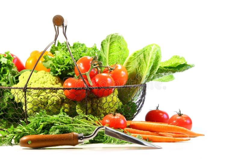 trädgårds- skyffelsommargrönsaker fotografering för bildbyråer