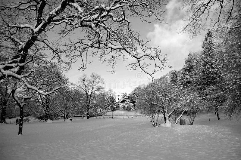 trädgårds- snow för stad royaltyfria foton