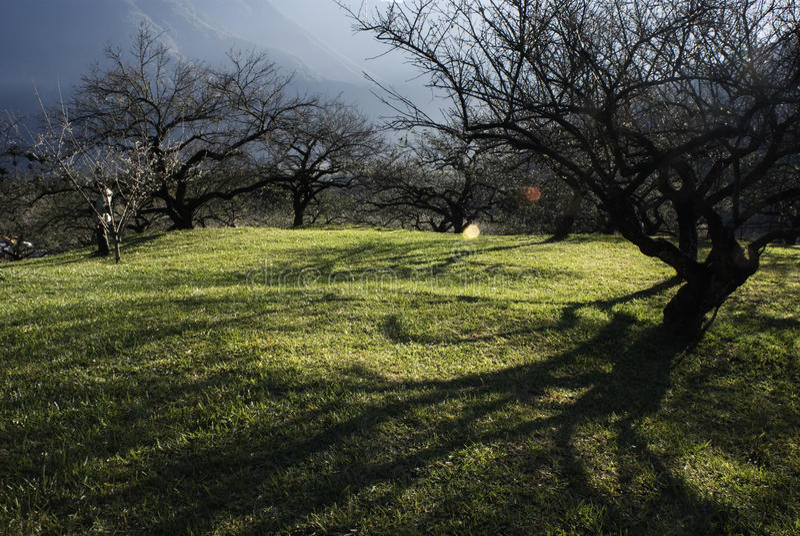 trädgårds- soluppgång för eucalyptus royaltyfri fotografi