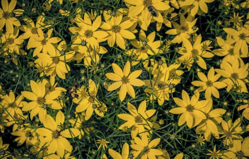 trädgårds- sommar för blomningblommor royaltyfri foto