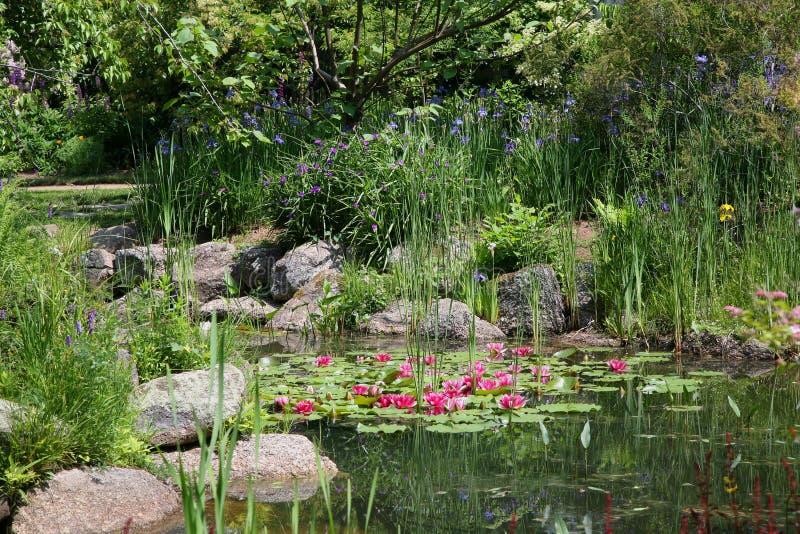 trädgårds- sommarvatten royaltyfri foto