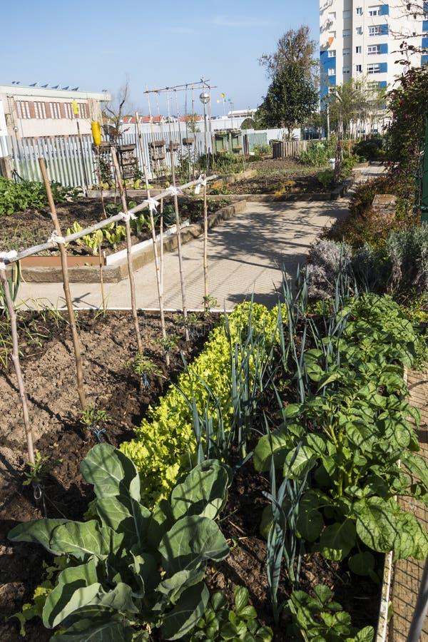 trädgårds- stads- royaltyfria bilder
