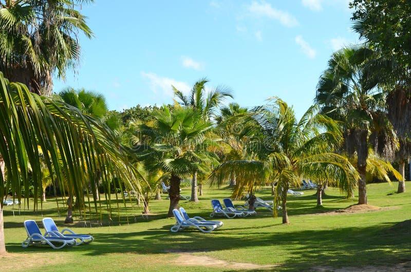 trädgårds- stora vardagsrumar för chaise fotografering för bildbyråer