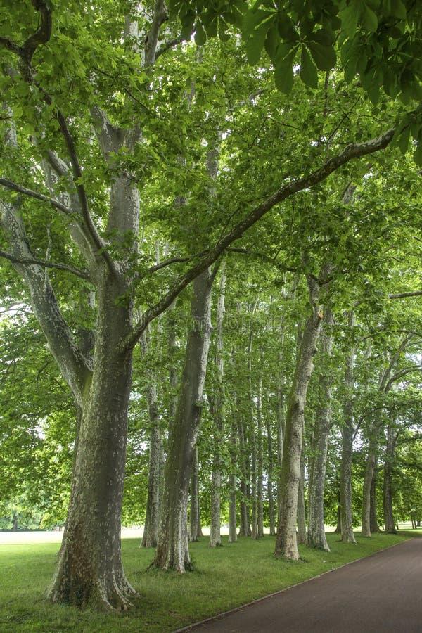 Trädgårds- tete D eller Parc de la Tete D ` eller i Lyon, Frankrike trädgården som namnges av guld, går mot tresor Parkera av det royaltyfri foto