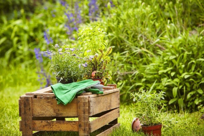 Trädgårds- träaskväxter för stilleben arkivfoto