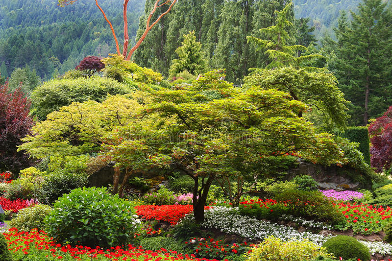 trädgårds- tree för blomma royaltyfri foto