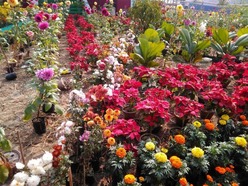 trädgårds- trevligt royaltyfri fotografi