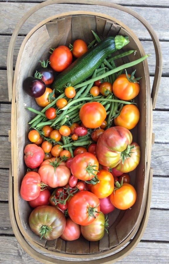 Trädgårds- trugskördkorg med självodlade grönsaker, tomater, arkivbilder