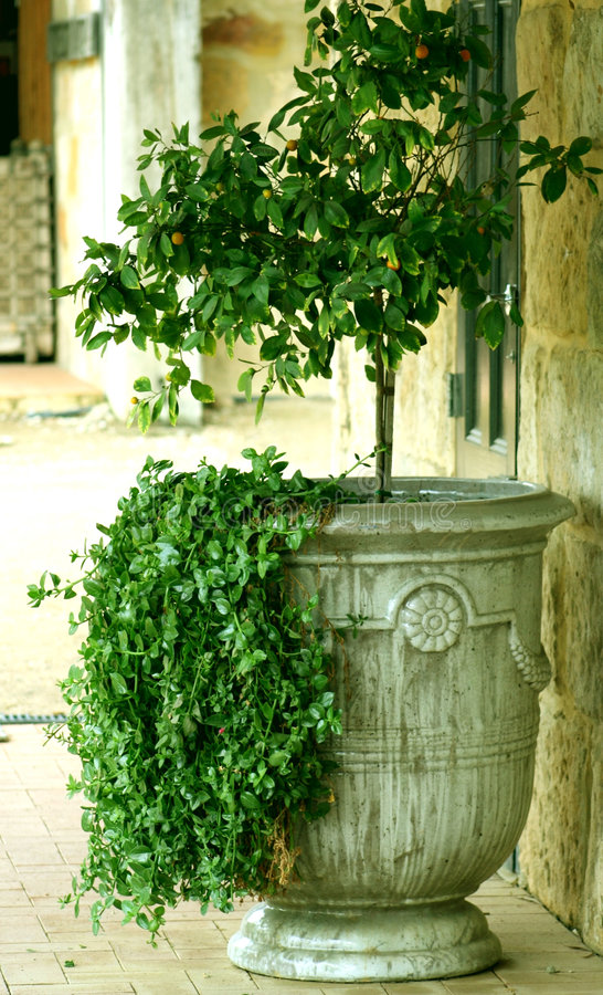 trädgårds- urn royaltyfria bilder
