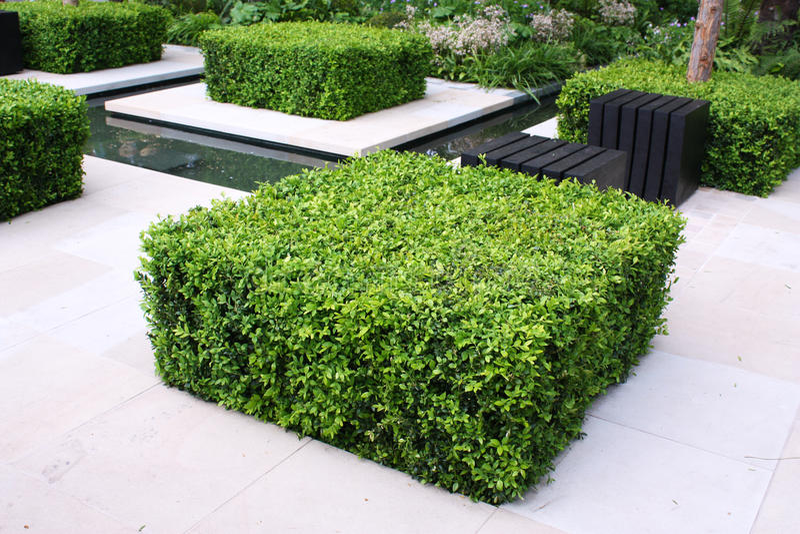 trädgårds- utomhus- royaltyfri foto