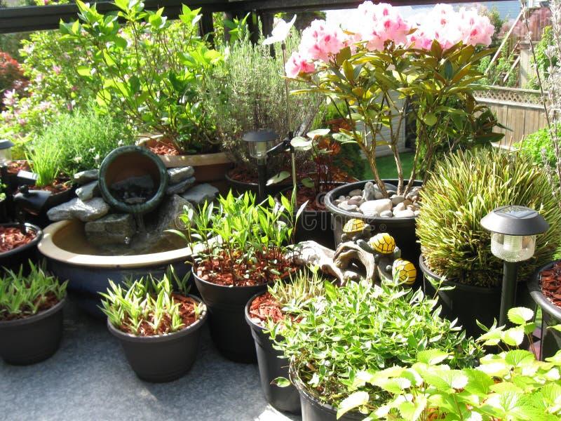trädgårds- utomhus- uteplats arkivfoton