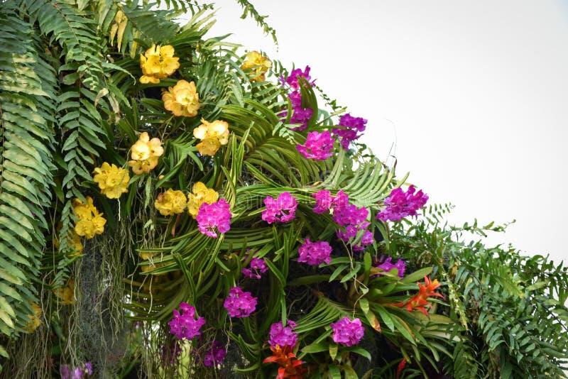 Trädgårds- växt med den färgrika blomman royaltyfria foton
