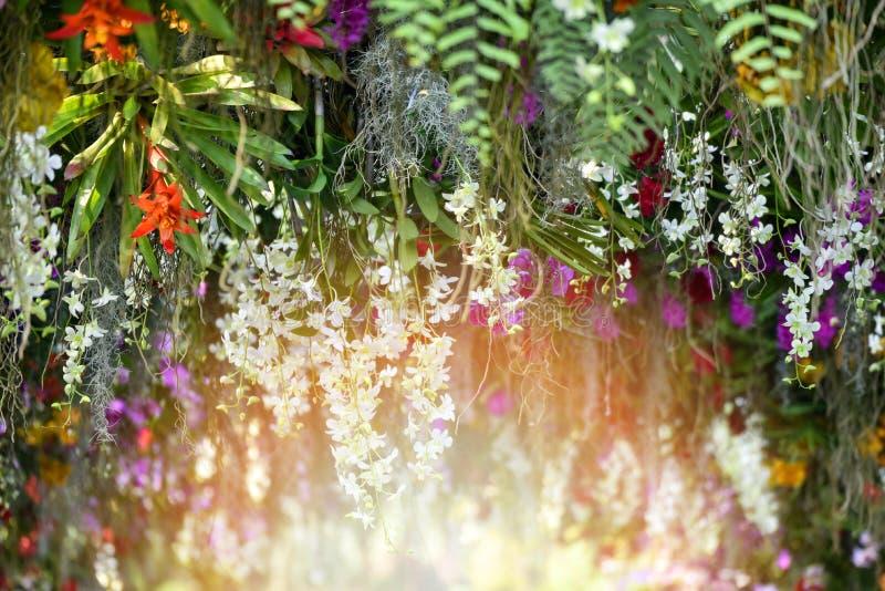 Trädgårds- växt med den färgrika blomman arkivbilder