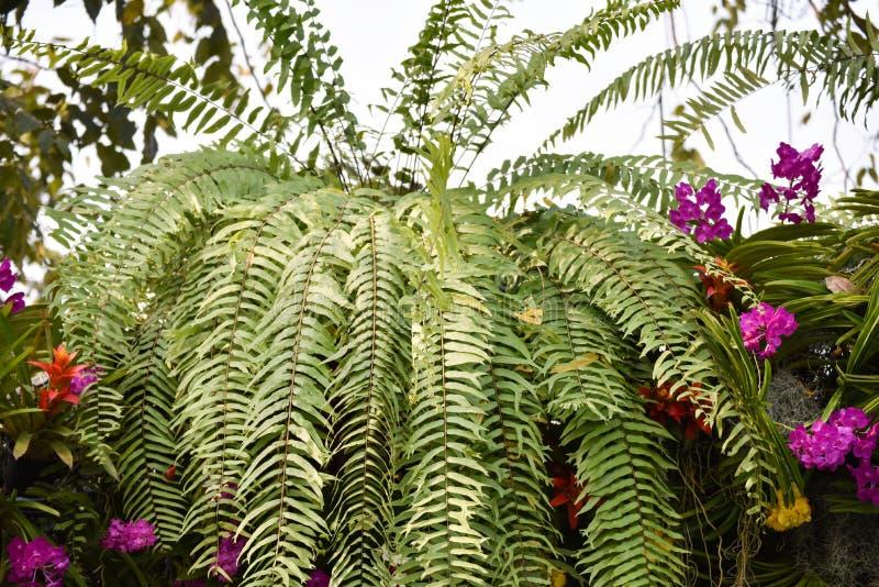 Trädgårds- växt med den färgrika blomman royaltyfria bilder