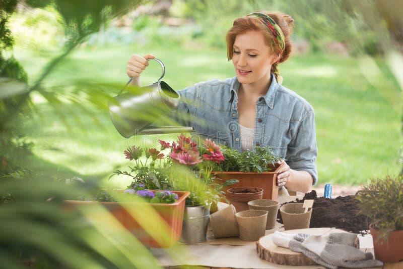 trädgårds- växter som bevattnar kvinnan arkivfoto