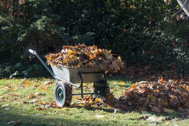 Trädgårds- vagn med samlade lönnlöv royaltyfria bilder