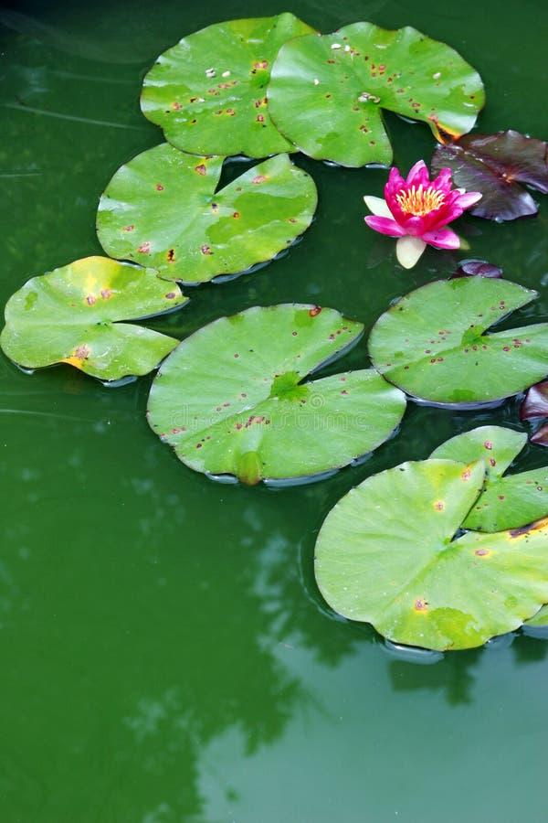trädgårds- vatten royaltyfria foton