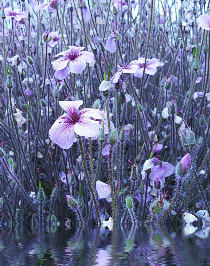 trädgårds- vatten för blomma royaltyfri bild