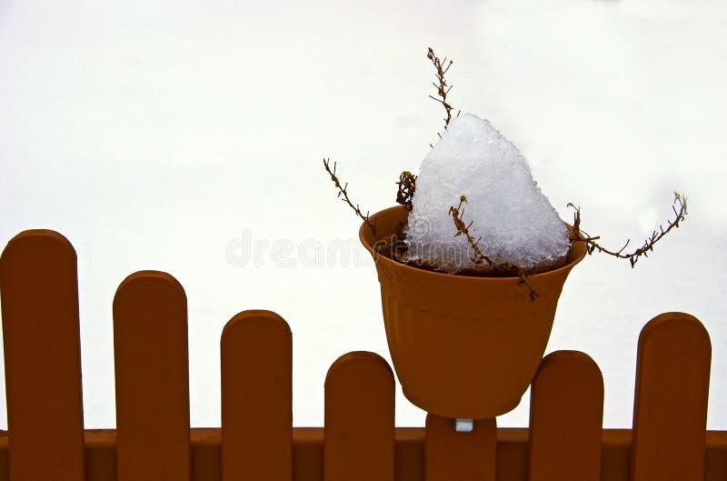 trädgårds- vinter arkivfoton