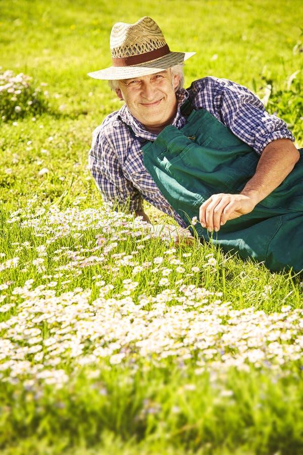 Trädgårdsmästareängblommor royaltyfri fotografi