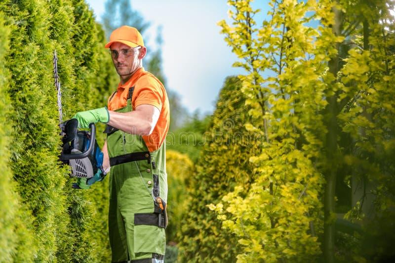 Trädgårdsmästare Green Wall Trimming fotografering för bildbyråer