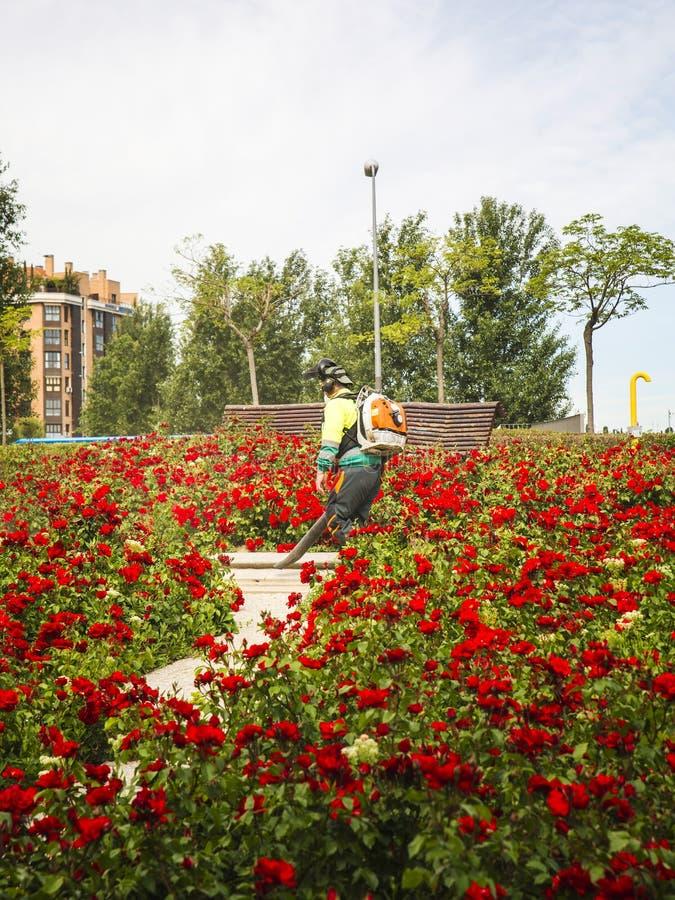 Trädgårdsmästare med en bladblåsare som gör ren trädgården arkivbild