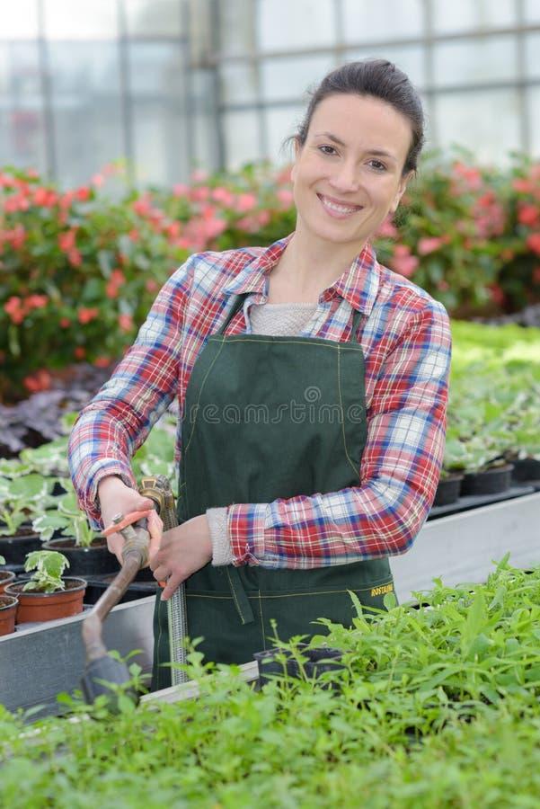 Trädgårdsmästare med hemmastadda växter fotografering för bildbyråer