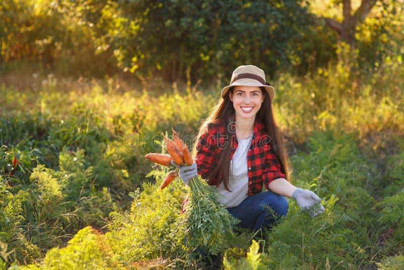 Trädgårdsmästare med morötter i en grönsakträdgård royaltyfria foton