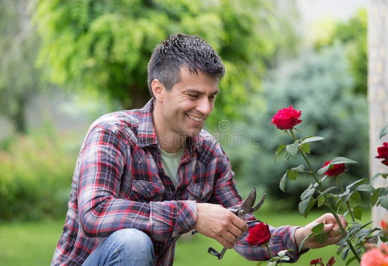 Trädgårdsmästare med sax och den röda rosen royaltyfri bild