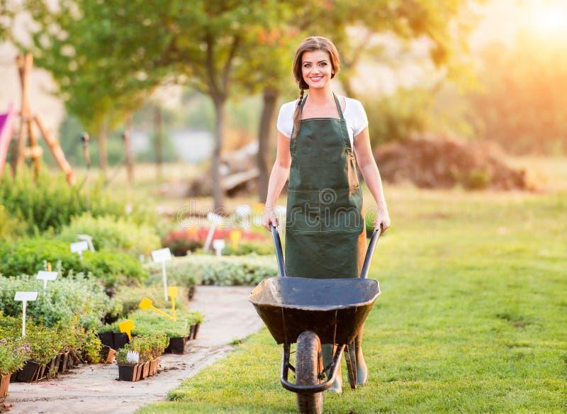 Trädgårdsmästare med skottkärran som arbetar i bakgården, solig natur arkivbild