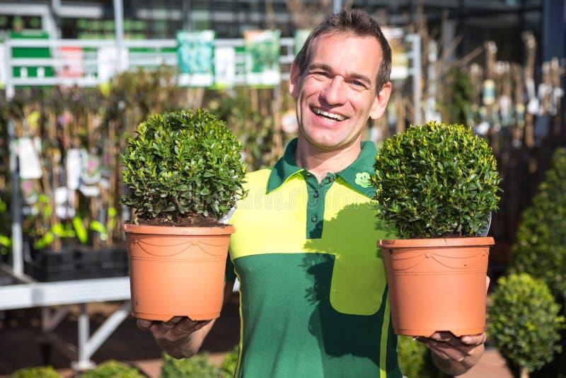 Trädgårdsmästare på den trädgårds- mitten som poserar med boxtrees royaltyfri fotografi