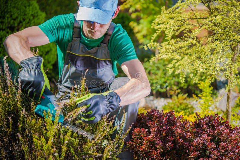 Trädgårdsmästare som arbetar i en trädgård royaltyfria foton