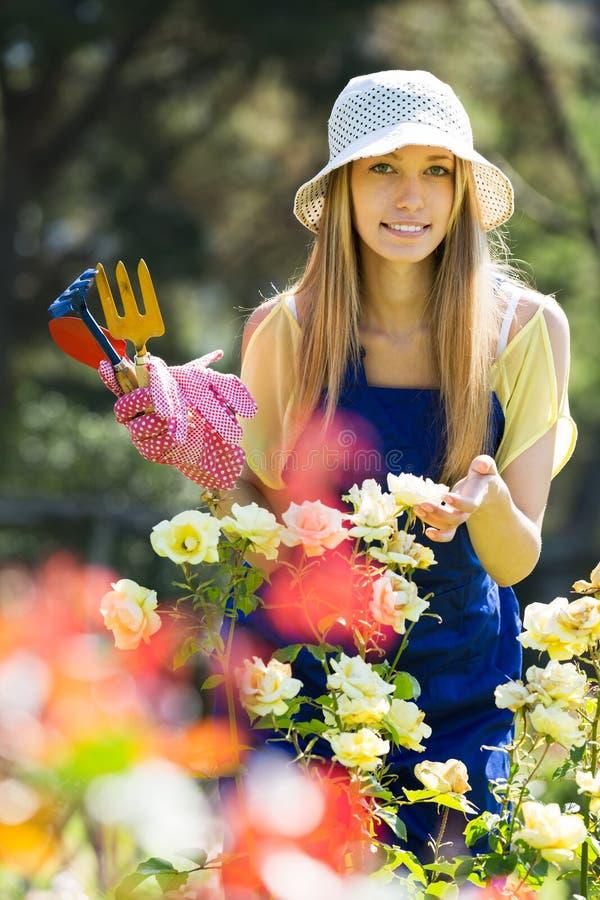 Trädgårdsmästare som arbetar i rosväxt royaltyfria foton