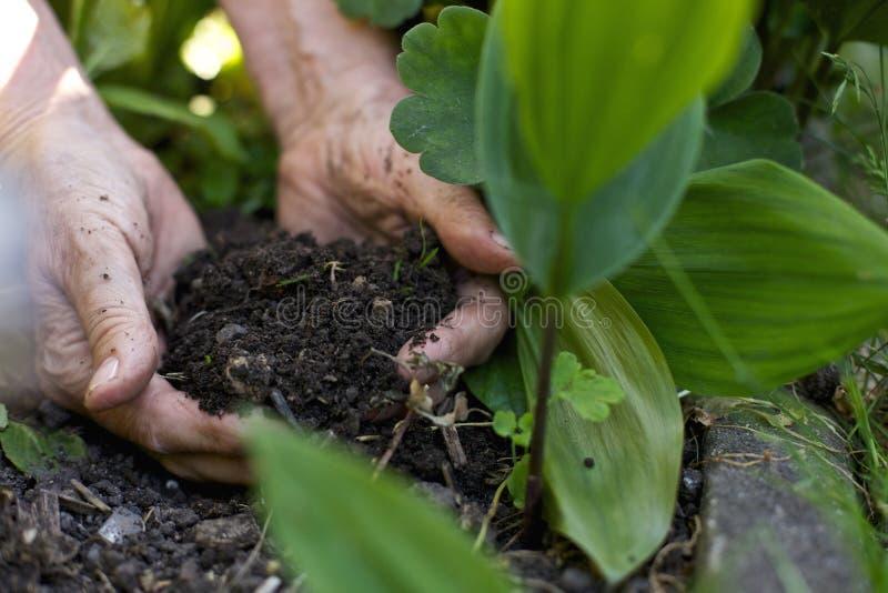 Trädgårdsmästare som arbetar i trädgården royaltyfri fotografi