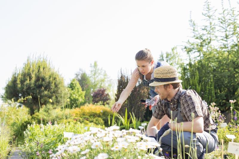 Trädgårdsmästare som arbetar på växtbarnkammaren royaltyfria bilder