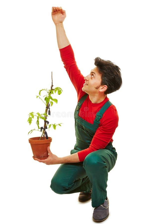 Trädgårdsmästare som beräknar tillväxt av växten royaltyfria foton