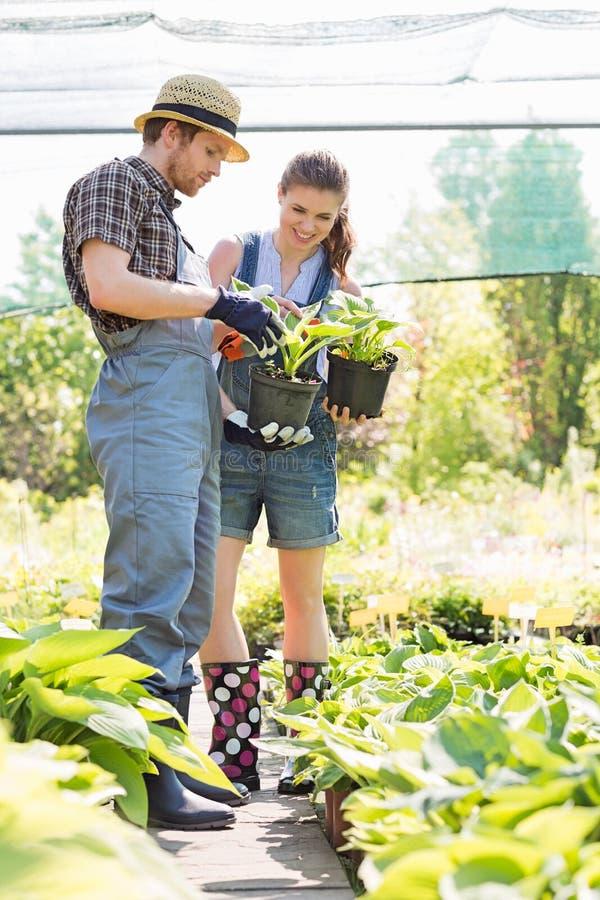 Trädgårdsmästare som diskuterar över inlagda växter på trädgården royaltyfri foto