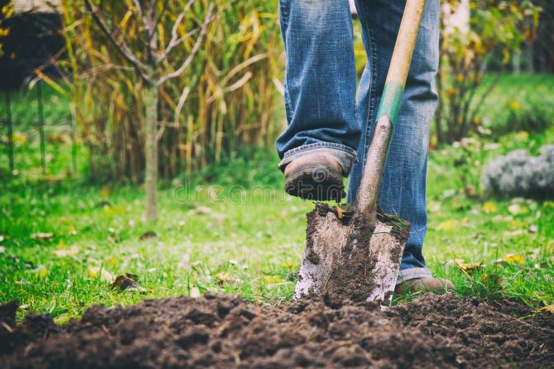 Trädgårdsmästare som gräver i en trädgård med en spade royaltyfria foton