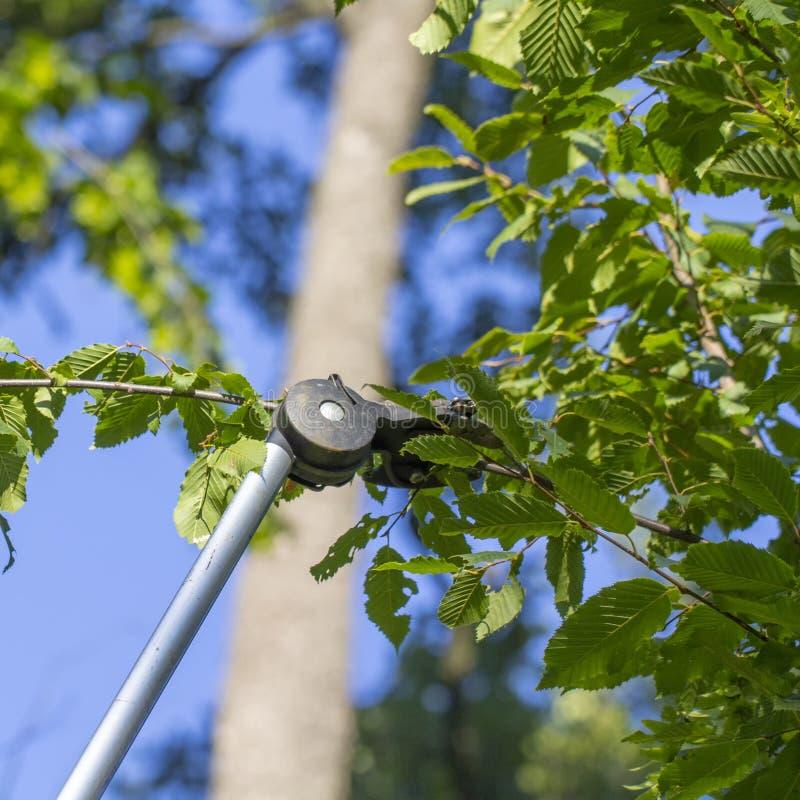 Trädgårdsmästare som klipper den gröna busken med beskäraremaskinen arkivfoto