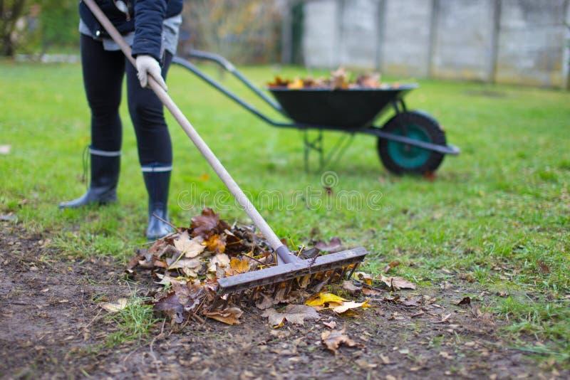 Trädgårdsmästare som krattar sidor på jord på hösten arkivbild