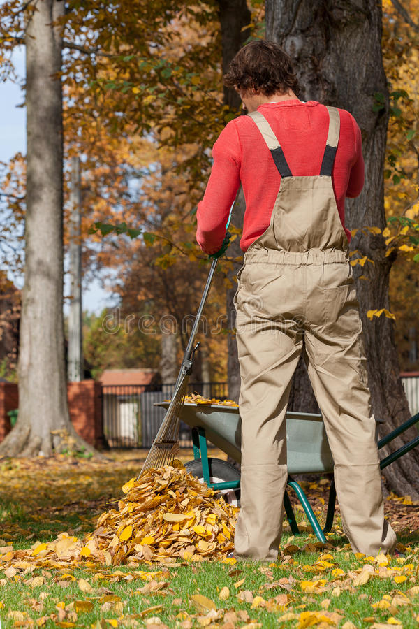 Trädgårdsmästare som krattar upp royaltyfria bilder