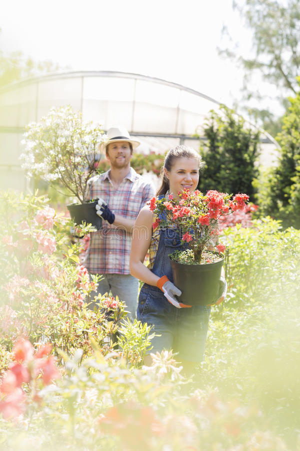 Trädgårdsmästare som rymmer lade in växter utanför växthus royaltyfria foton