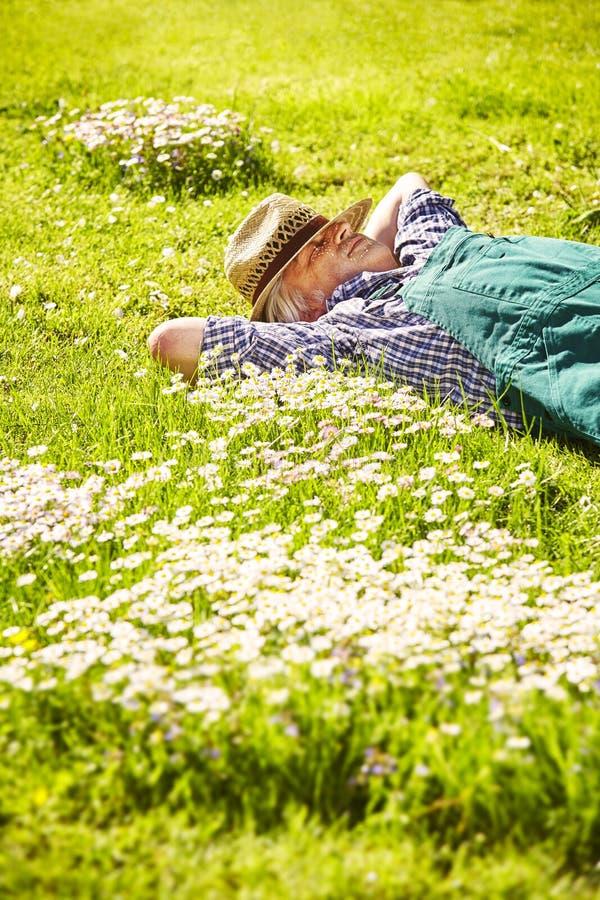 Trädgårdsmästare som sover ängblommor fotografering för bildbyråer