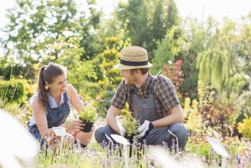 Trädgårdsmästare som talar, medan arbeta i trädgården på växtbarnkammaren arkivbilder