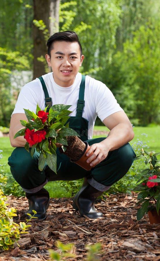 Trädgårdsmästare som tar bort blomman från krukan arkivfoton