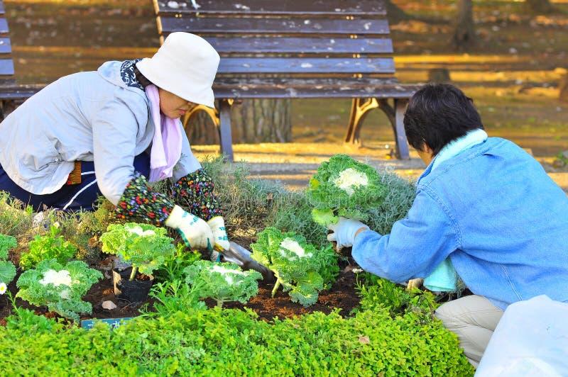 trädgårdsmästarejapan royaltyfri bild